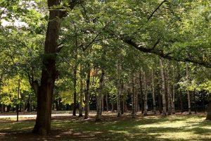 外国人観光客も注目の円山エリアは体験型スポットの宝庫!