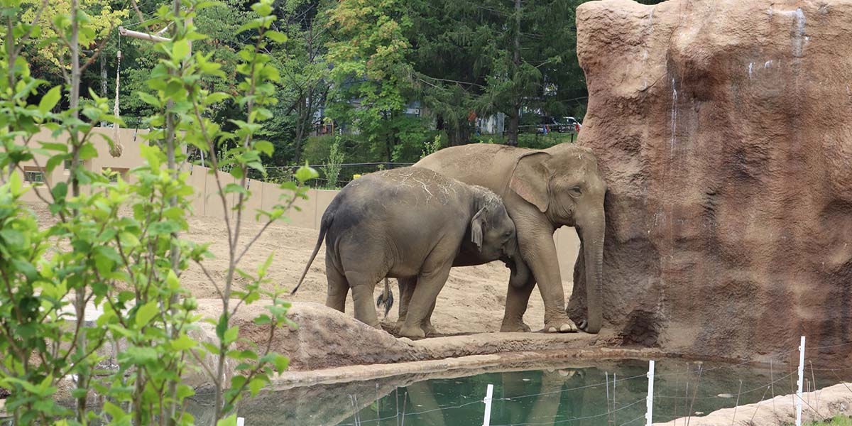 圆山动物园