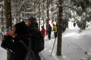 冬の自然観察