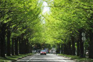 北海道大学構内散策