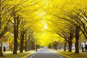ก่อนที่จะเข้าฤดูหนาวที่มีหิมะตกจนขาวโพลน ใบไม้ของต้นไม้ในเมืองจะกลายเป็นสีแดงและสีเหลือง