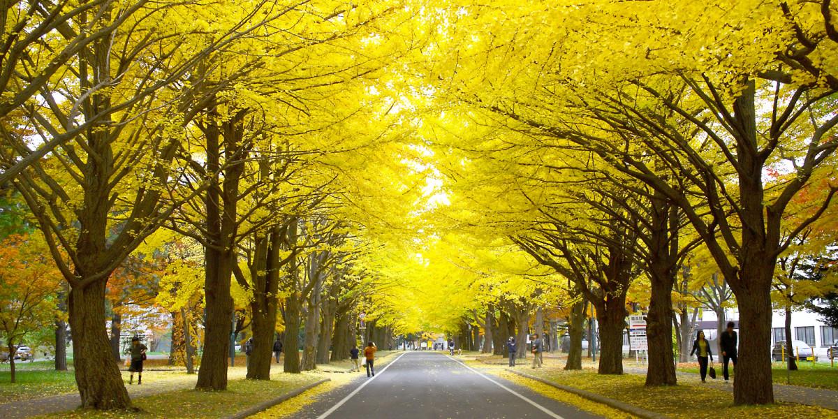 Sebelum salju musim dingin turun dan memutihkan semuanya, pepohonan kota memerah dan menguning.