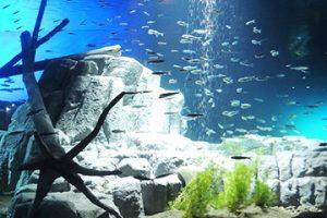 水族館の生き物