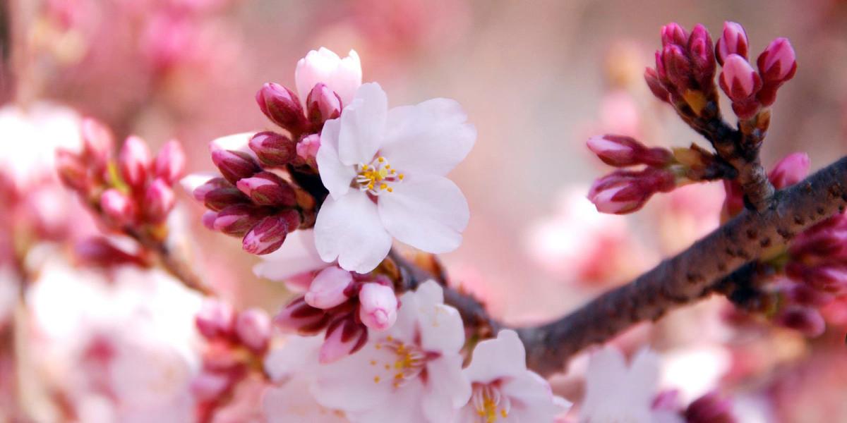 札幌の春(3月4月5月) | 特集記事 | 観光スポット | ようこそさっぽろ ...