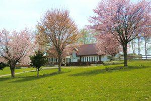 5月上旬は桜が見頃