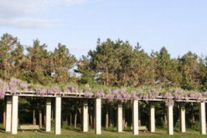 石造りの藤棚