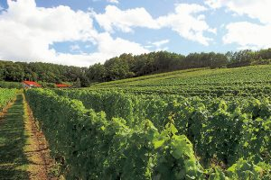 ぶどうの産地北海道で、地元のワインを味わおう